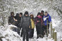 Winter walk, Brampton Wood
