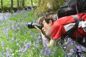 Bluebells at Lake District
