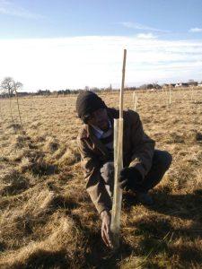 tree planting nov