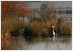 Stanwick lakes (Sat. 18/01/14)