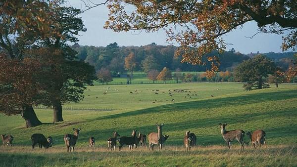 Woburn Deer Park. Woburn Abbey.