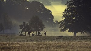 deer-park_16-9